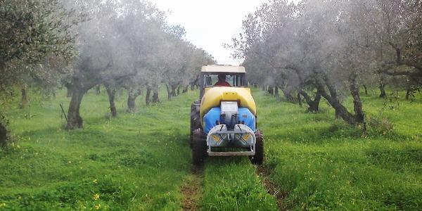 Xylella: disposizioni riguardanti trattamenti fitosanitari in regime di agricoltura biologica e convenzionale da effettuare sulle piante di olivo nelle aree delimitate